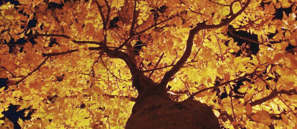 Albero come simbolo della vita per la bioarchitettura